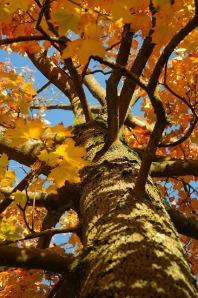 tree-228155_640