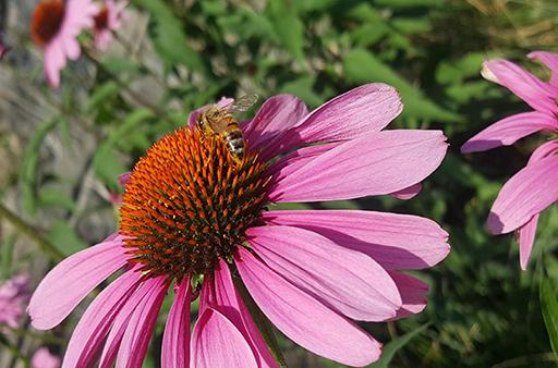 Bees-Use-Blog